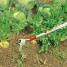 Мотыга WOLF-Garten 10см HU-M 10
