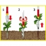 Удалитель сорняков с D-ручкой 85см WOLF-Garten iW-F